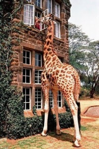 Está en la naturaleza de la jirafa ser alta y comer hojas