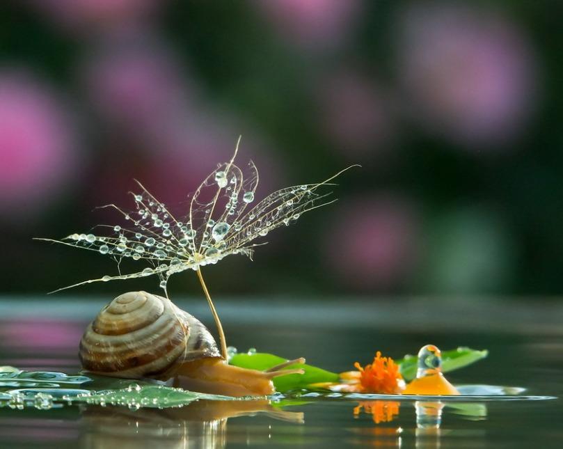 Fotografía: La vida secreta de los caracoles.