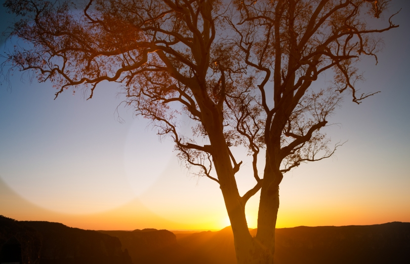 tree_sunset
